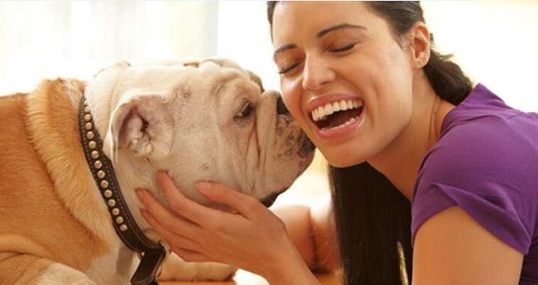 تاثیر حیوانات خانگی بر استرس و افسردگی