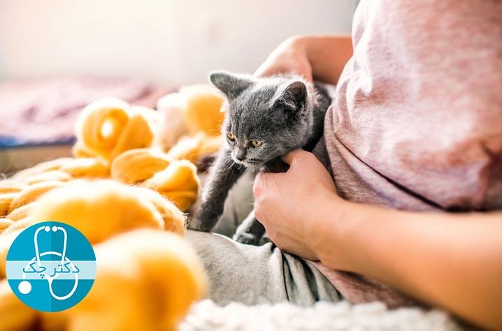 ارتباط عاطفی گربه ها با صاحبانشان