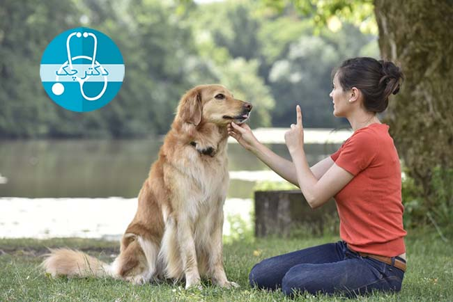 شغل آموزش سگ ها