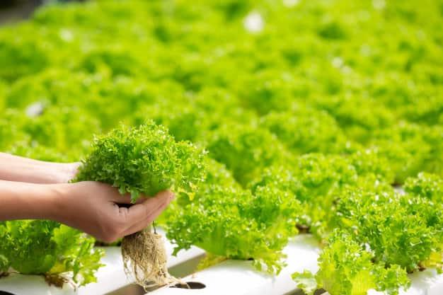 نحوه کاشت سبزیجات